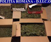 VIDEO – Acțiune a procurorilor DIICOT Alba. Patru persoane cercetate pentru trafic de droguri de mare risc