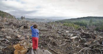 Un RAPORT al Agenţiei Americane pentru Investigaţii de Mediu atrage atenția Guvernului că JAFUL PĂDURILOR continuă în România. Schweighofer  se aprovizionează cu lemn din parcurile naționale ale țării . CE SCRIE ÎN RAPORT ?