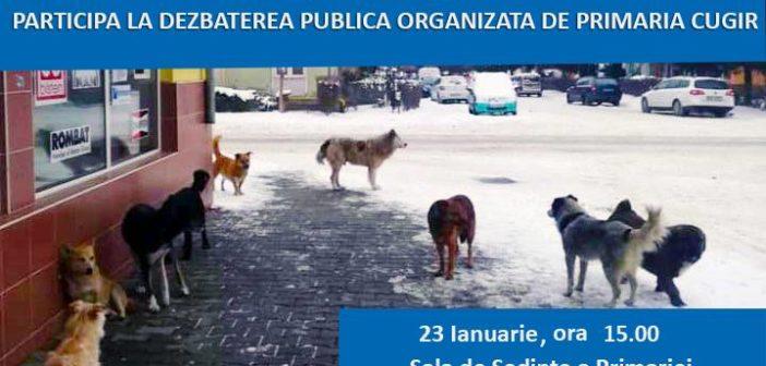 La Cugir: Soarta câinilor comunitari, în dezbatere publică